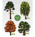 Color Sketch Tree Set vector image
