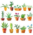 watercolor drawing home plants vector image