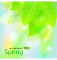 spring background with green leaves vector image vector image