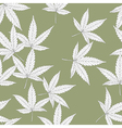 cannabis leaves vector image vector image