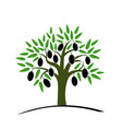 olive tree with green leaves tree with black vector image