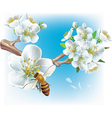 flowering branch and a bee vector image vector image