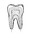 Doodle tooth vector image
