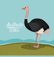 australia ostrich poster with outdoor scene in vector image