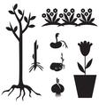 seedling set vector image