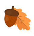 oak acorn is flat or cartoon style isolated on vector image