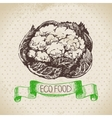 Hand drawn sketch cauliflower vegetable Eco food vector image