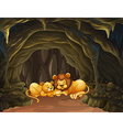 Two lions sleeping in the cave vector image vector image
