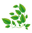 color branches with leaves icon vector image