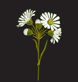 Hand drawn colorful bouquet of chamomile flowers vector image