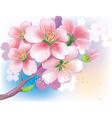 flowers of sakura vector image vector image