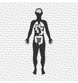 human anatomy design vector image