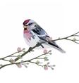 Beautiful Spring Watercolor Bird vector image