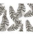 black seamless pattern with drawn fern vector image