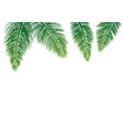 coconut leaves isolated on white background vector image