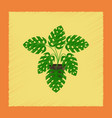 flat shading style plant monstera vector image