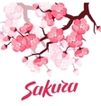 Japanese sakura background with stylized flowers vector image