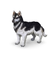 Photorealistic husky dog on white vector image