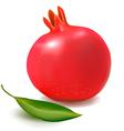fresh pomegranate vector image vector image