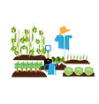 vegetable beds vector image