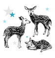 3 hand drawn baby deers in vintage style vector image vector image
