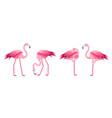 cartoon pink flamingo bird set vector image