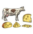 pieces of cheese half round head and triangle of vector image