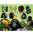 monkey business vector image vector image
