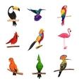 Exotic Birds Set vector image