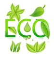 nature eco leafs vector image vector image