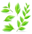 set of a collage of green tea leaves vector image