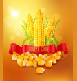 background with grains and cobs of corn vector image