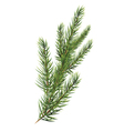 Spruce branches Christmas tree branch vector image