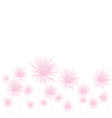 chamomile pink bottom vector image vector image
