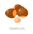 Pile of nuts hazelnut vector image