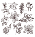 Sketch Herbs And Spice Collection vector image