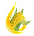corn oil vector image vector image