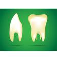 Teeth object vector image vector image