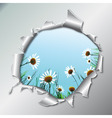 chamomiles in metallic hole vector image