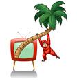 Urangutan hanging on the coconut branch vector image