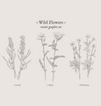 wild flowers vintage set vector image