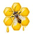 bee on honeycells vector image vector image