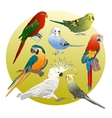 Different Parrots set vector image