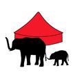 elephants in circus vector image