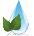 Water drop and two leaves vector image
