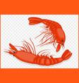 shrimps isometric vector image