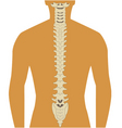 spine vector image