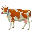 Brown and white cow side view isolated vector image