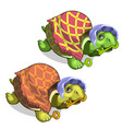 old tortoise in grandmothers suit holds golden key vector image