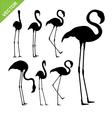 Flamingo bird silhouettes vector image